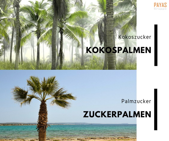 palmen_blog